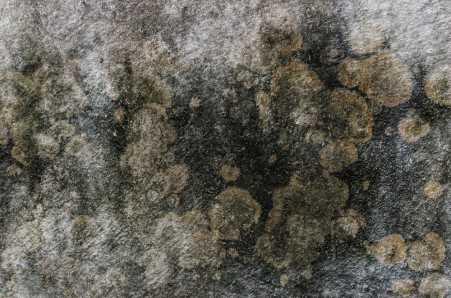 Стена покрытая плесенью