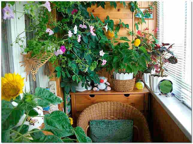 Для того чтобы ваш сад был круглый год зеленый и цвел, в одном большом горшке разместить цветы с разными сроками цветения